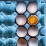 Skąd pochodzi jajko?